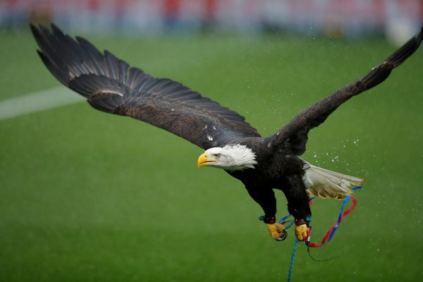 Court hears how Charlton fan tried to punch Crystal Palace's eagle in the head